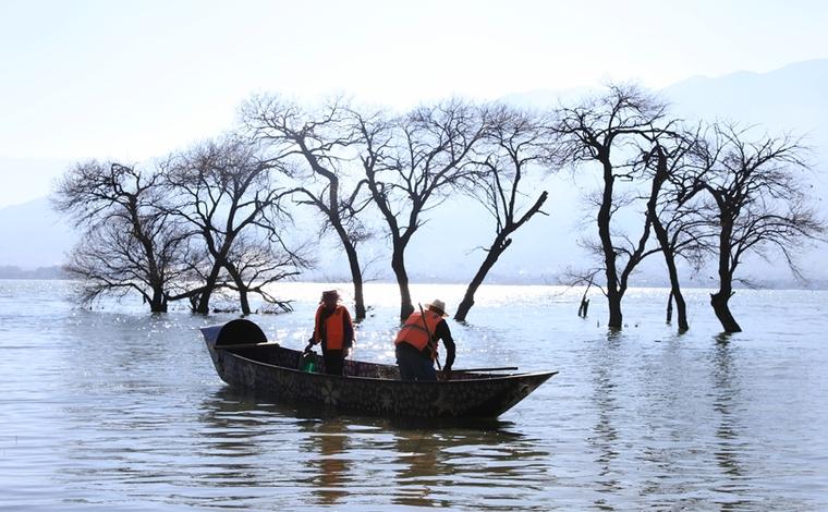 """圖片故事:洱海之濱 有群櫛風沐雨的""""銀發衛士"""""""