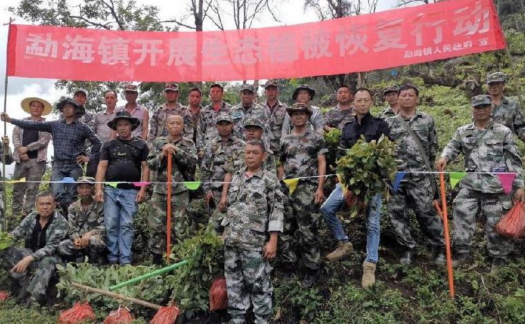 雲南動海:嚴打種茶毀林行為 恢復受損林地植被