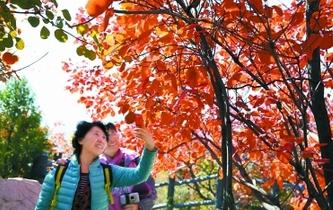 金秋北京11處園林景區宜賞紅
