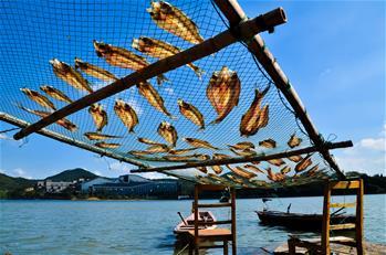 魚幹飄香秋意濃