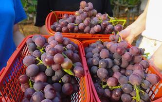 江西樟樹:農業旅遊熱起來