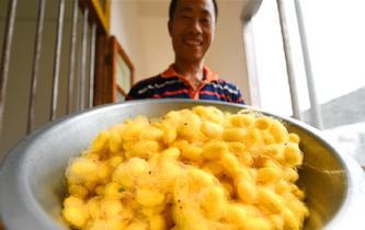 蠶農陳東日:我的夢想是彩色的