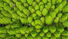 江蘇泗洪百畝水杉林似調色板