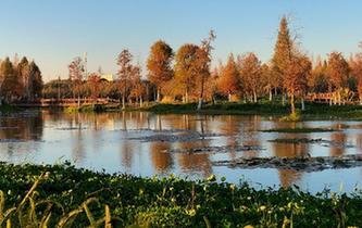滇池濕地冬日美