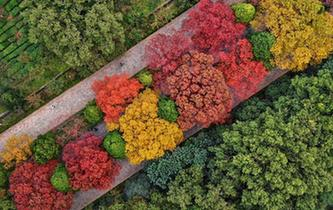 """南京紫金山""""色彩斑斕""""迎來最美季"""