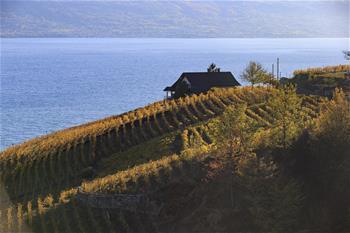 瑞士拉沃之秋