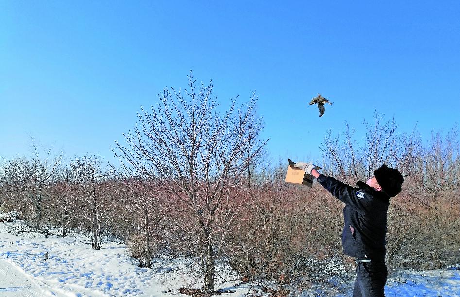 保护野生动物 新疆森林公安在行动