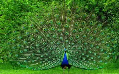 对称花纹在动物身上展现得淋漓尽致,神奇的是,不同的形状,颜色给人
