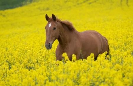 马蹄子为奇数蹄-聊聊动物 蹄子到底有什么用